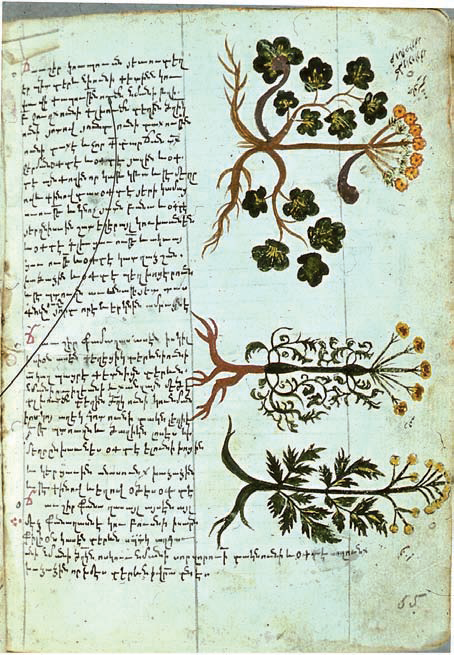 Species of Opopanax used in Ancient and Medieval Armenian medicine(Mashtots Matenadaran, MS. 6594)